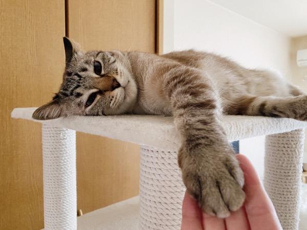 前脚を伸ばしてニンゲンの手にタッチ。