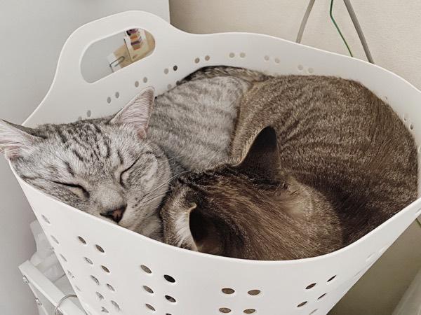 密すぎる猫たち。