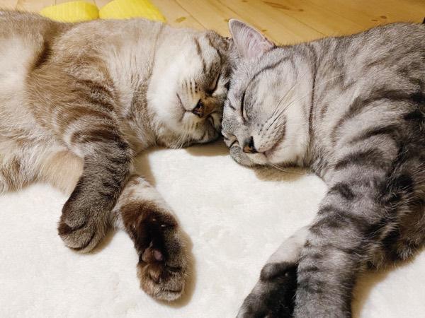 幸せそうな寝顔の猫たち。