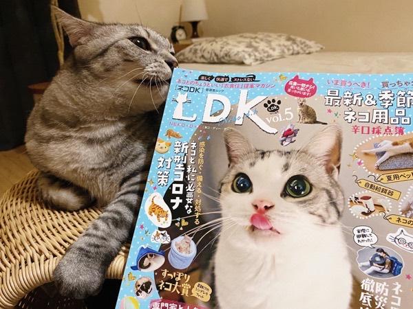 猫の情報誌「ネコDK」の角で鼻を掻いてるテトちゃん。
