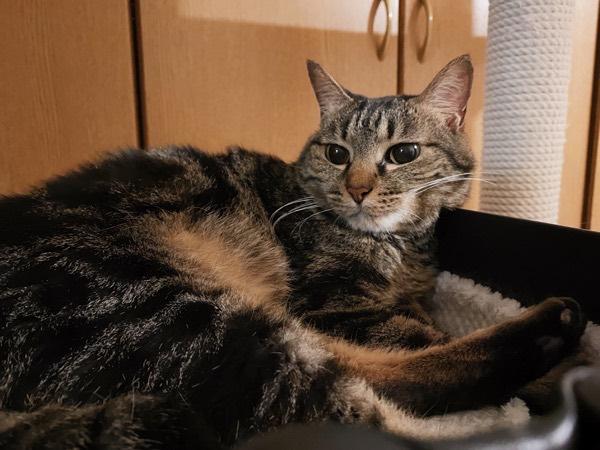 輸液が終わってくつろいでいる猫。
