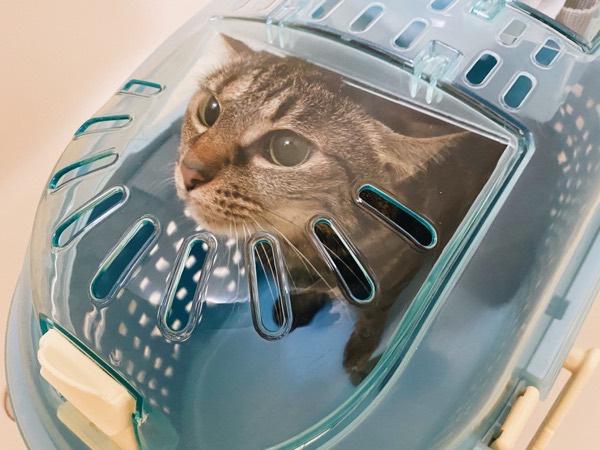輸液の準備ができるまで猫はここで待機。
