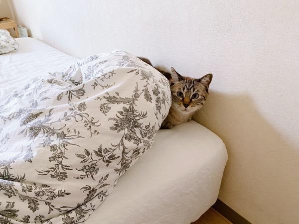 ふとんの端っこに身を潜めている猫。