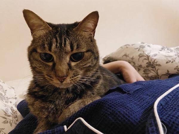 ニンゲンの脇の下にすっぽり収まった猫。