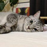 ベッドでニンゲンを待つ猫。