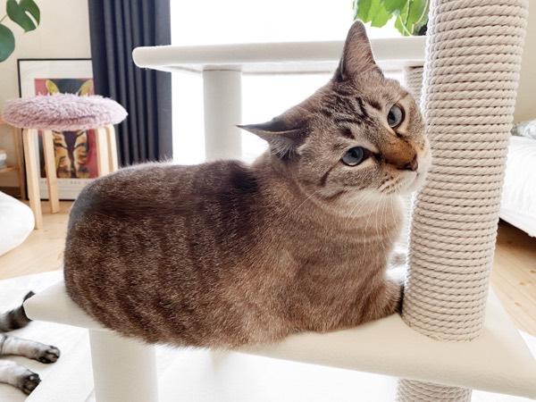 おジャマ猫その2。