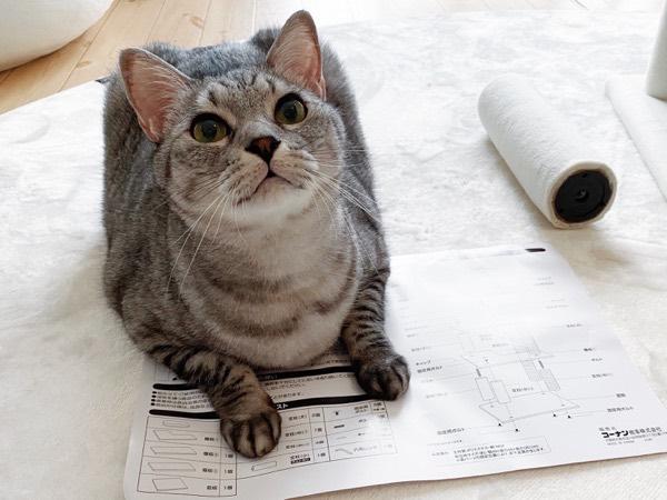 おジャマ猫。