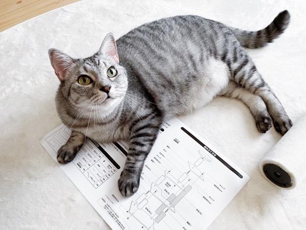 説明書の上に横たわる巨猫。