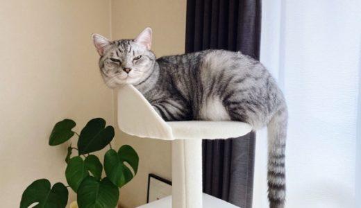 巨猫、無理やり小さいベッドに収まる