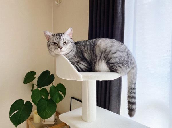 小さな寝床に無理やり収まる巨猫。