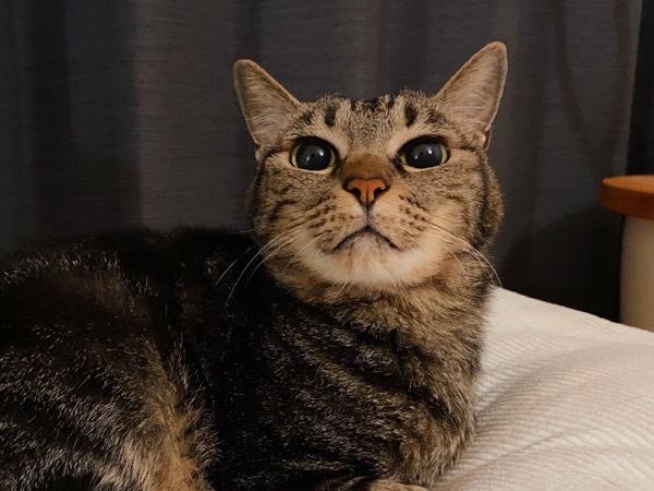 黒目が大きい猫。