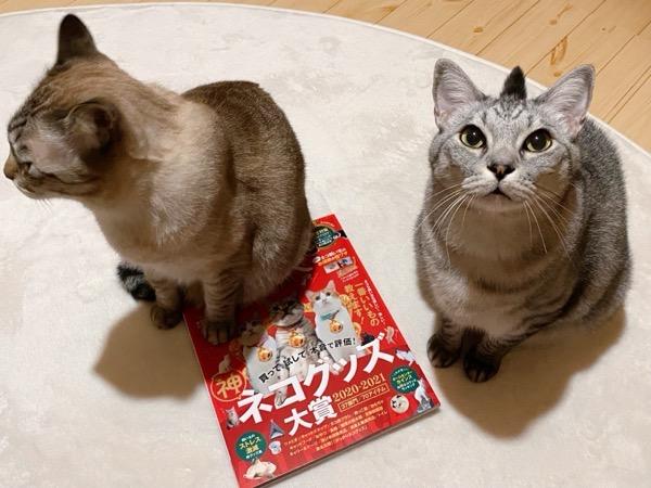 雑誌を座布団にする猫。