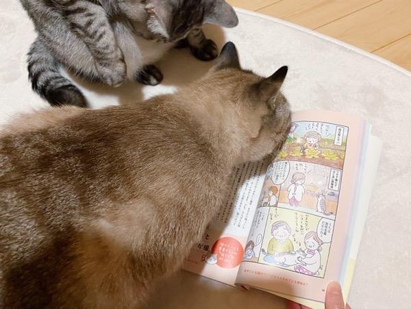 本のにおいを嗅ぐ猫。