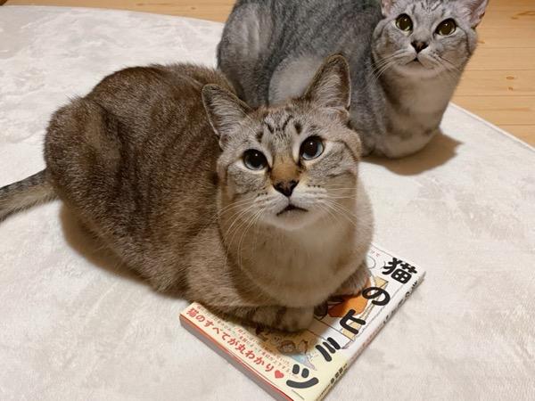 本の上で香箱座りをする猫。