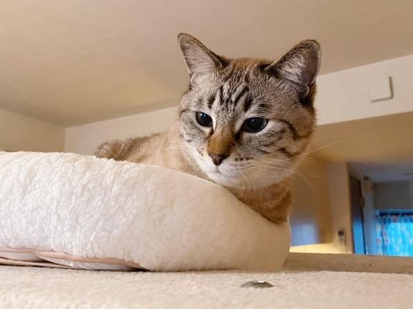 新しい猫ベッド。