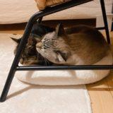 小さなベッドに収まる猫たち。