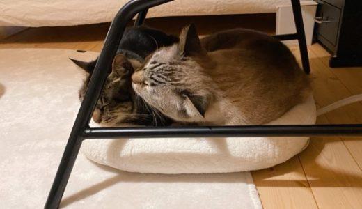 今年は猫用ホットカーペットも大活躍