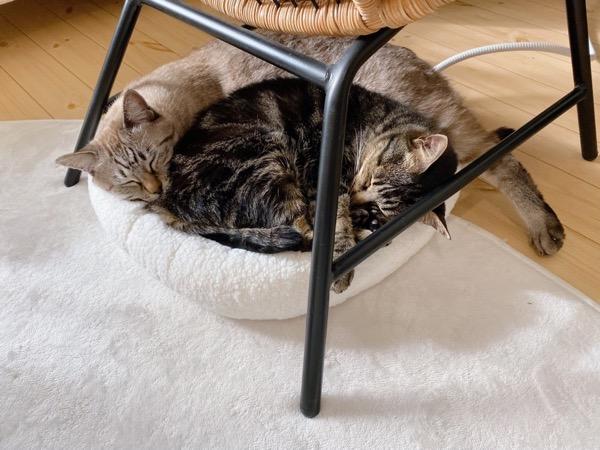 2匹には小さすぎる猫ベッド。