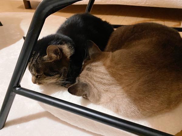 仲良く眠る猫たち。
